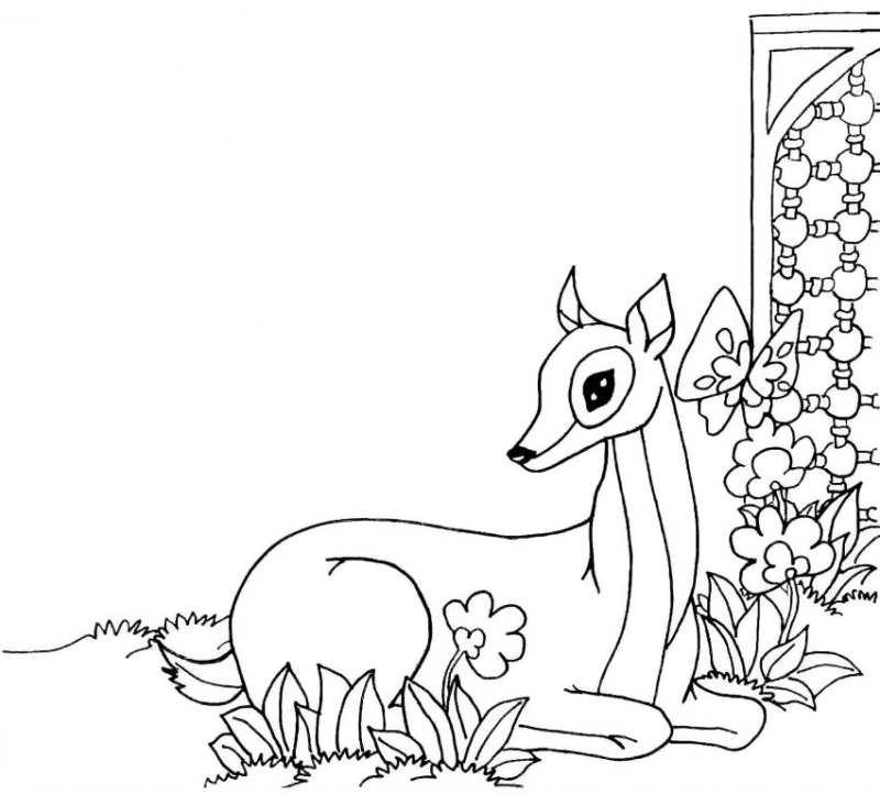 عکس طوطی برای نقاشی