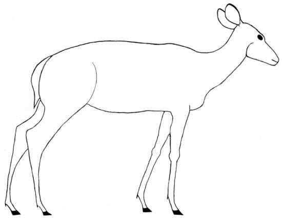 نقاشی ساده از آهو