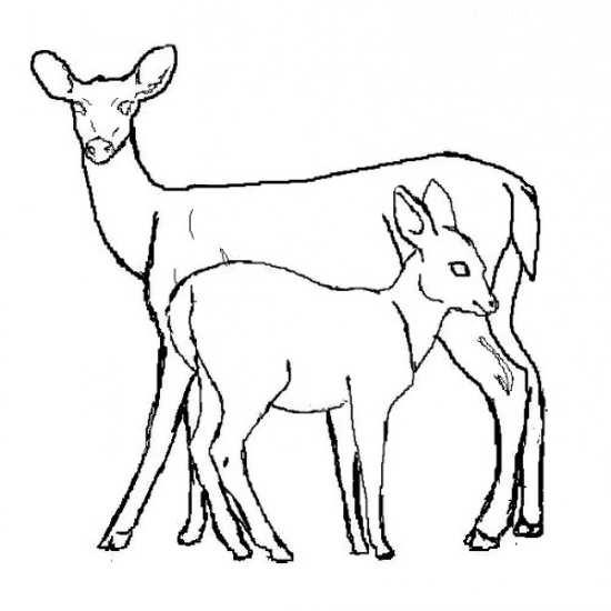 نقاشی از بچه آهو و مادر
