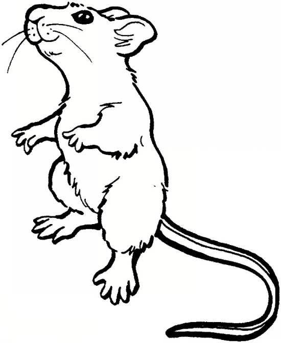 نقاشی های موش کودکانه