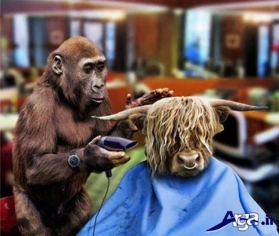 عکس های خنده دار از آرایشگاه