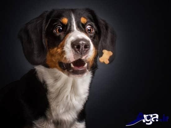 عکس های جالب سگ ها
