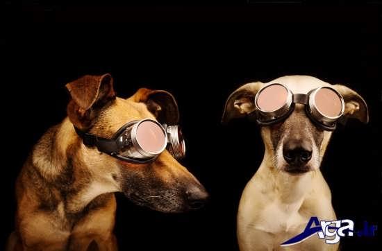 عکس جالب از سگ و عینک