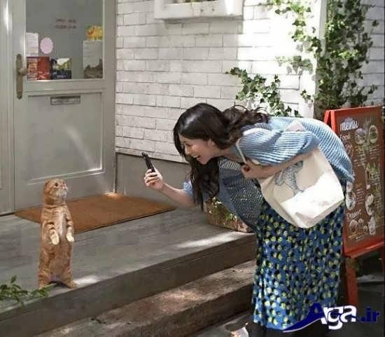 عکس خنده دار از گربه