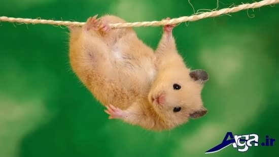 عکس های خنده دار موش