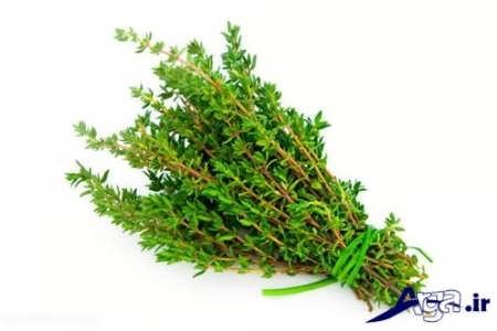 داروی گیاهی برای درمان انواع سرفه