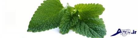 داروهای گیاهی عالی برای سرفه