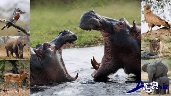 عکس گونه های مختلف حیوانات وحشی