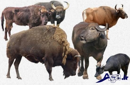 عکس از گونه های مختلف حیوانات وحشی