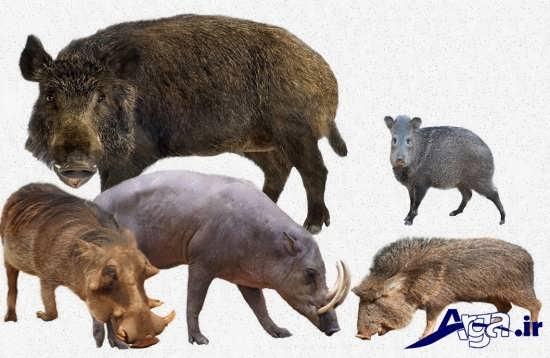عکس حیوانات جنگل وحشی