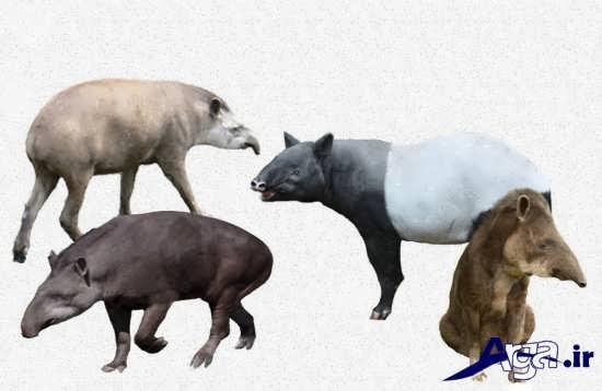 عکس از انواع حیوانات وحشی