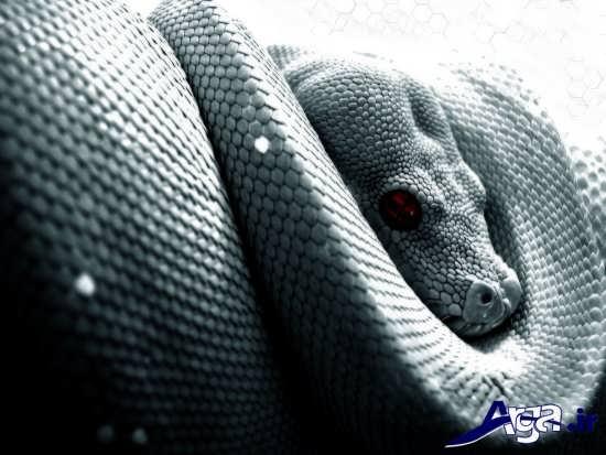عکس حیوانات وحشی مار