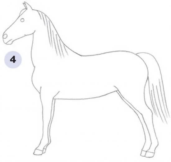 مراحل کشیدن اسب