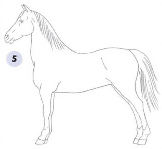 نقاشی کشیدن از اسب