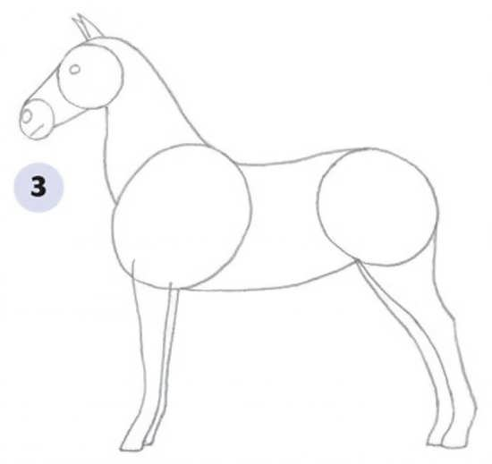 مراحل نقاشی کشیدن اسب