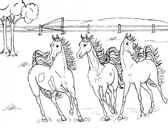طرح اسب های زیبا