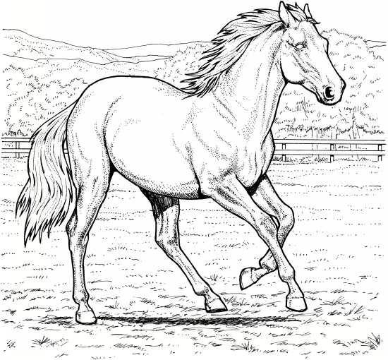 نقاشی و رنگ امیزی اسب