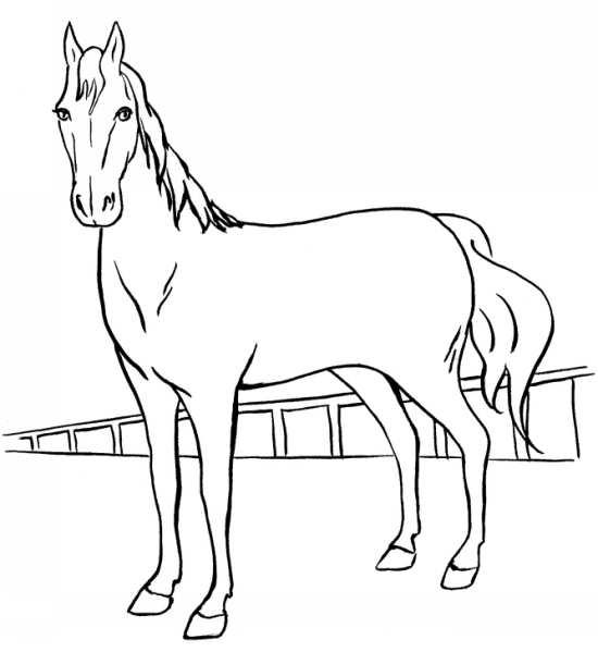 طرح اسب برای نقاشی