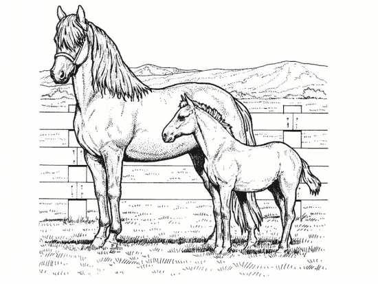 رنگ آمیزی اسب های زیبا