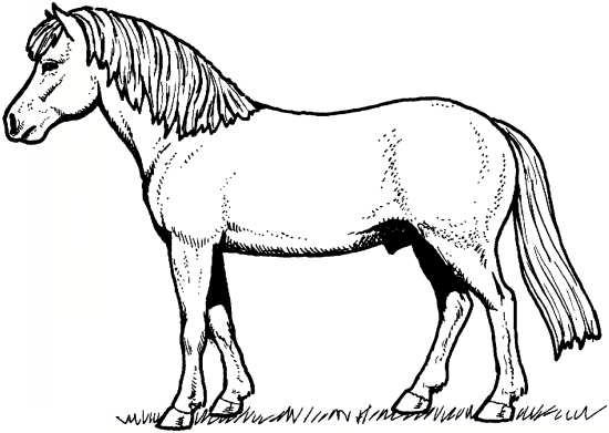طرح اسب برای کودکان