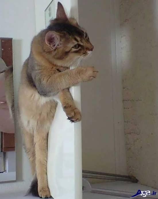 عکس خنده دار گربه بامزه