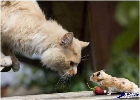 عکس جالب موش و گربه