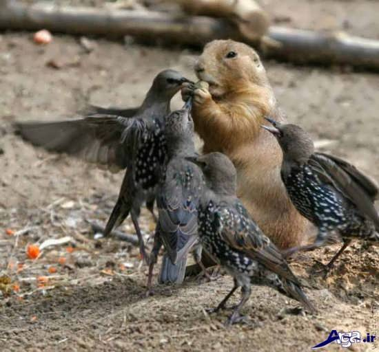 عکس حیوانات خنده دار و جالب