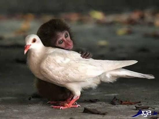 عکس خنده دار دوستی حیوانات
