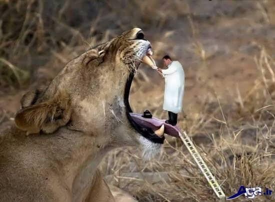 عکس خنده دار از زندگی حیوانات