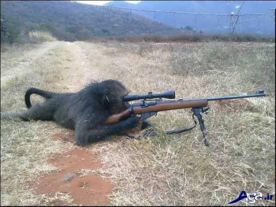 عکس میمون خنده دار