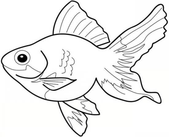 نقاشی های ماهی