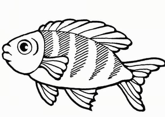 نقاشی موجودات دریایی