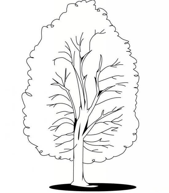 نقاشی آسان درخت