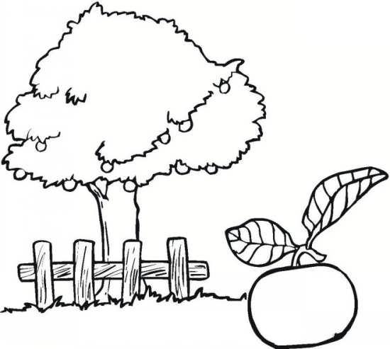 نقاشی کودکانه درخت میوه