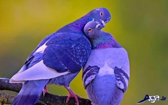 عکس پرندگان قشنگ