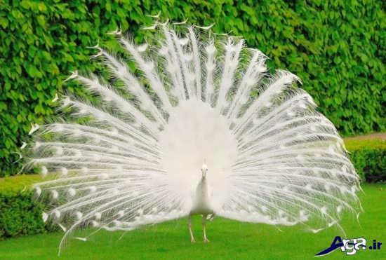 عکس زیباترین پرنده