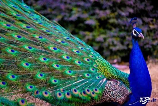 زیباترین پرنده های دنیا