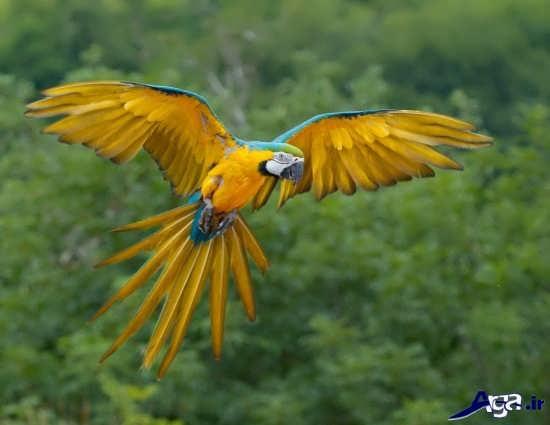 عکس زیبای پرنده در حال پرواز