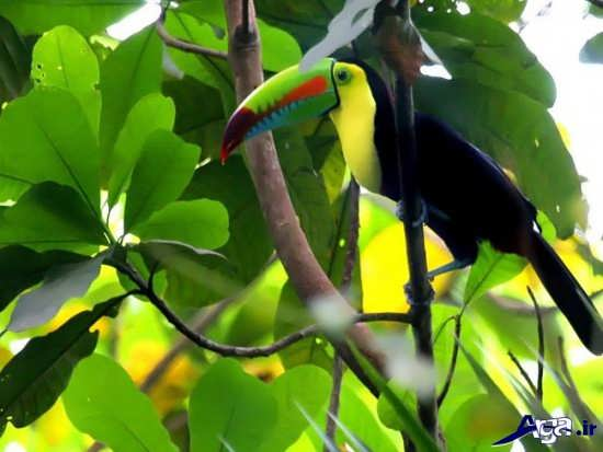 عکس پرنده با نوک زیبا
