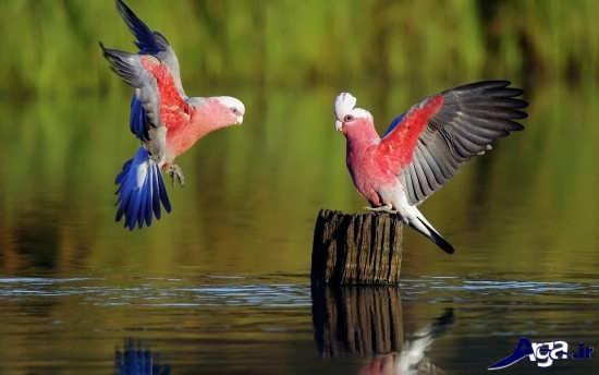 پرنده های زیبا و خاص