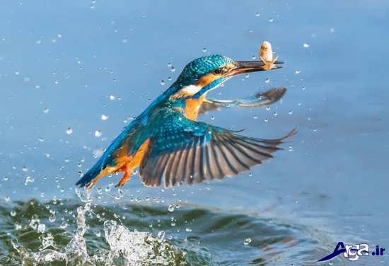 تصاویر پرنده های زیبا
