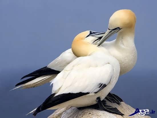 عکس جدید پرنده های زیبا