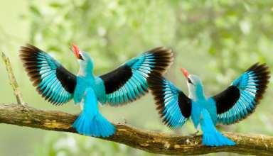 عکس پرنده های زیبا