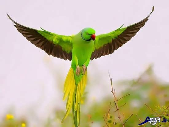 عکس طوطی زیبا و قشنگ