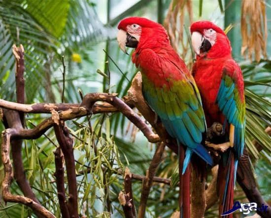 عکس پرنده های خاص و متفاوت