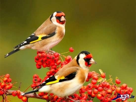 عکس های پرنده زیبا