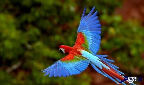 عکس های پرنده های زیبا