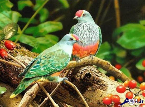 عکس پرندگان زیبا