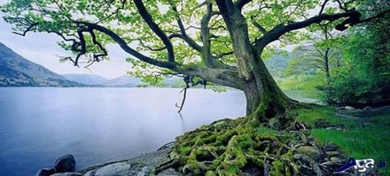 عکس هایی از مناظر طبیعی خارق العاده