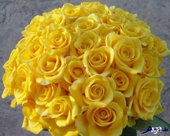 نمونه های زیبای ی از دسته گل رز زرد